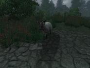 Вівця (Oblivion) 3