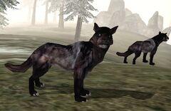 Wolf Bloodmoon