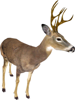 Oblivion Deer