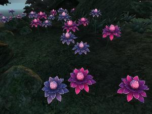 Квітки мани