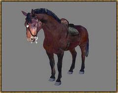 Гнідий кінь