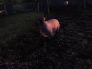 Вівця (Oblivion) 2