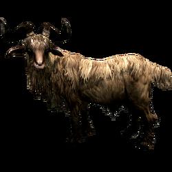 Коза збоку