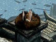 240px-Hawk Nest