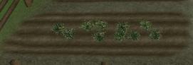 FarmingPlot