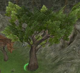 Great Oaken Tree