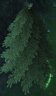 Pynwood Tree