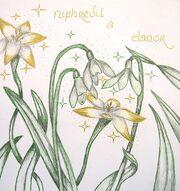 Niphredil y Elanor