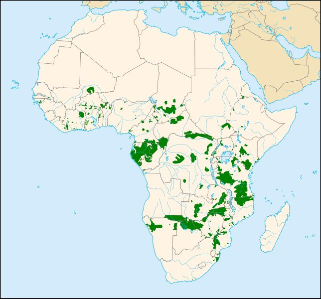 Afrikanischer Elefant   EleWiki   FANDOM powered by Wikia