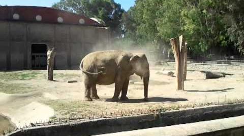 Elefante - Zoo di Napoli