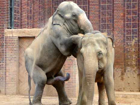 Bild - Tiergeschichten-05-elefanten-MBQF-10918204,templateId ...