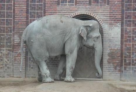 Elefanten   EleWiki   FANDOM powered by Wikia