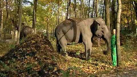 Ázsiai elefántok érkeztek a Nyíregyházi Állatparkba