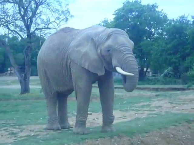 Les éléphants de Port Saint Père