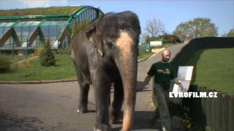 Slon indický v ZOO ÚSTÍ NAD LABEM 05
