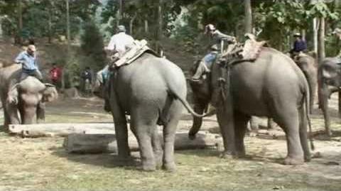 Sofimek - Mekong Elephant Camp