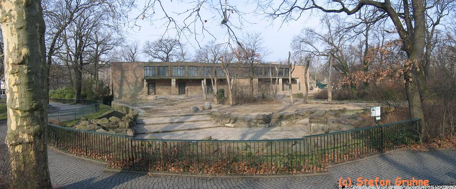 Berlin-aussen-kuehe-panorama