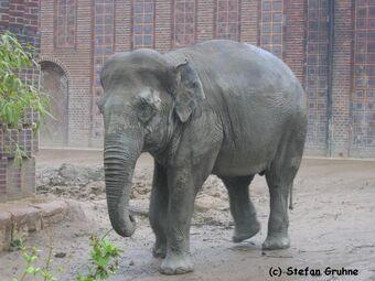zoo leipzig thura
