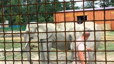 Zoo di Ravenna. Elefanti da spettacolo