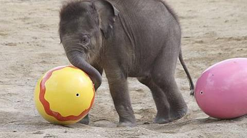 Elefantenbaby Jamuna Toni - 1