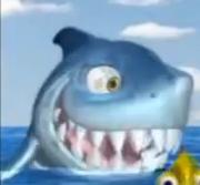 Chasy shark