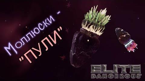 "Elite Dangerous - Моллюски - ""ПУЛИ"""