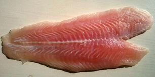 Fish-raw
