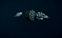 Capsule-Mollusc-in-ED