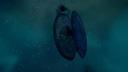 Reel-Mollusc-1