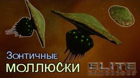 Elite Dangerous - Зонтичные моллюски
