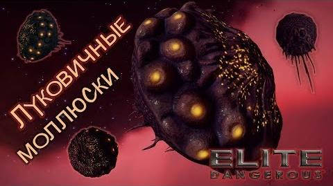 Elite Dangerous - Луковичные моллюски