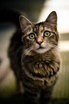 9ff98b1edda1b9621c1eb37022e70381--hate-cats-big-cats
