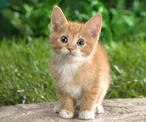 Cats-animals-grass-kittens--800x960
