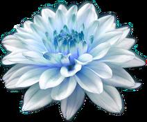 Divider flower pic
