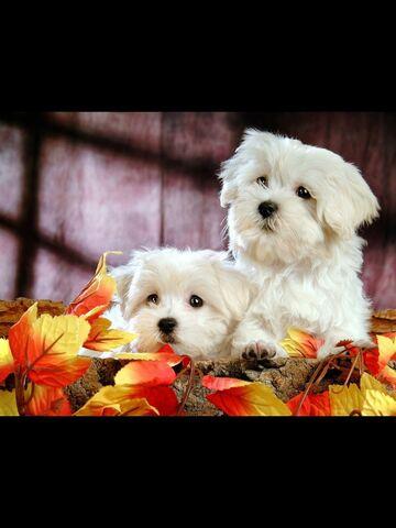 File:Puppy's .jpg
