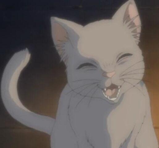 File:CatSmile.jpg