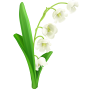 Lilyofthevalley.png