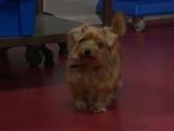 Tip (dog)
