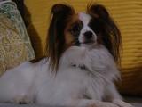 Tootsie (dog)