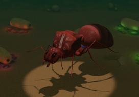 Gene-stealer queen ant