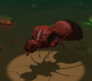 Gene Stealer Queen Ant