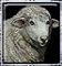 Овца обучение