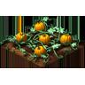 Crop Pumpkin Grown SW icon
