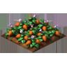 Crop Sweetpotato Grown SW Icon