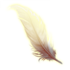 Feather of light