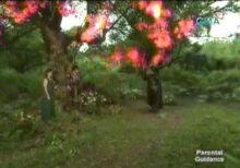 Image Asnamon Tree Before