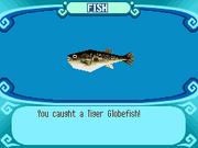 Tiger Globefish