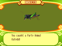 Party Animal Katydid
