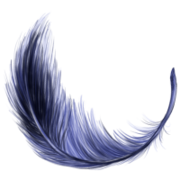 Nomade-melopsis