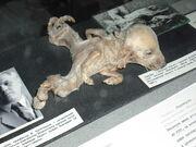 Kiev-UkrainianNationalChernobylMuseum 15